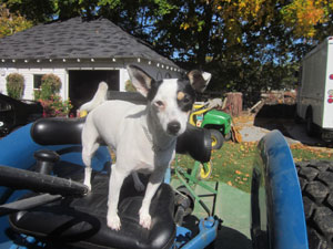 Lilly on the tractor