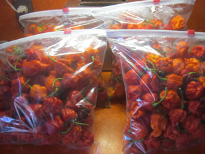 scorpion and carolina reaper peppers